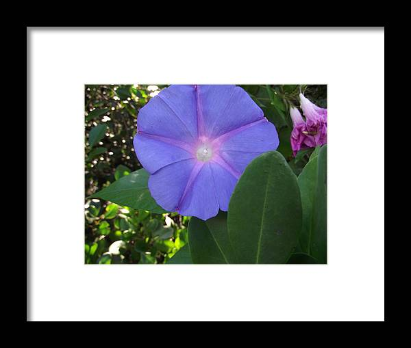 Flower Framed Print featuring the photograph Violet Star by Rani De Leeuw
