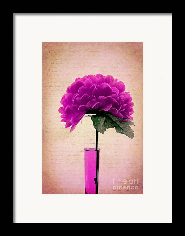 Violet Framed Print featuring the photograph Violine by Aimelle