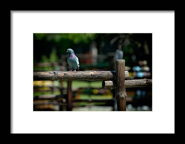 Bird Framed Print featuring the photograph Visitor by Zoran Buletic