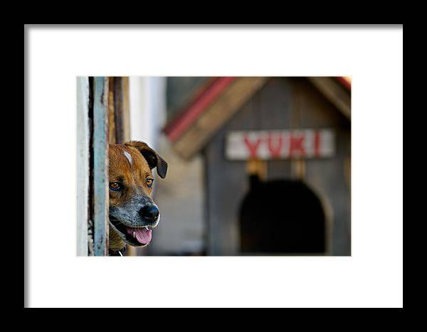 Animal Framed Print featuring the photograph Vuki by Zoran Buletic