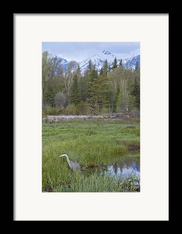 Egret Framed Print featuring the photograph Wading On Breakfast by Charles Warren