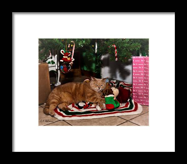 Cat Framed Print featuring the photograph Waiting For Santa by Christopher Holmes