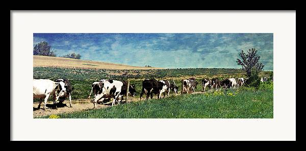 Cows Framed Print featuring the photograph Waiting In Line by Kathy Jennings