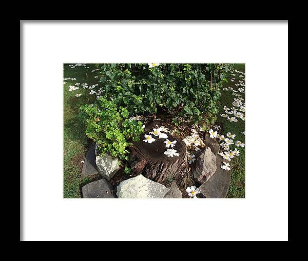 Tree Stump Framed Print featuring the photograph Waiting Place by Rani De Leeuw