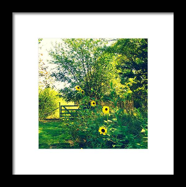 Landscape Framed Print featuring the photograph Walking On Sunshine by Megan Ford-Miller