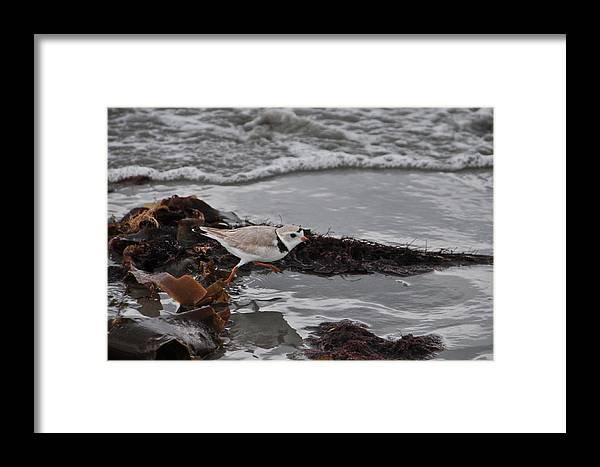 Beach Framed Print featuring the photograph Walking The Beach by Mike Martin