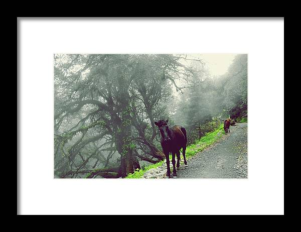 Horse Framed Print featuring the photograph Walking Time by Jayvardhan Kandpal