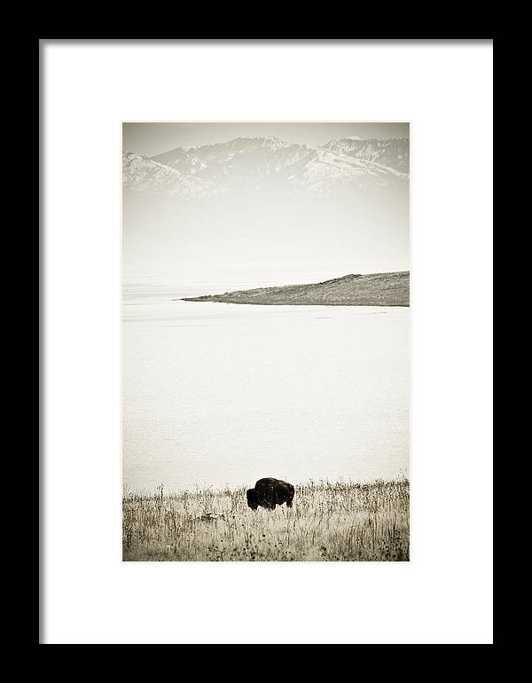 Utah Framed Print featuring the photograph Water Buffalo by Marilyn Hunt