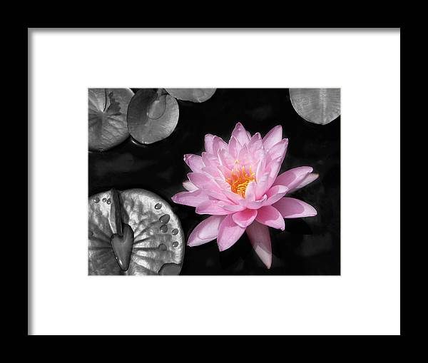 Dreaming Framed Print featuring the photograph Water Lily by Rudy Umans