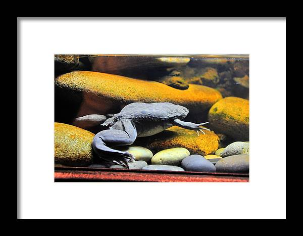 Live Life's Adventures Framed Print featuring the digital art Water Tight by Barry R Jones Jr