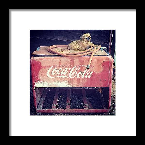 Antique Framed Print featuring the photograph We Don't Drink Pepsi Round These by Caitlin Schmitt