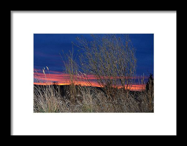 Weeds Framed Print featuring the photograph Weeds Can Be Pretty by Linda Larson