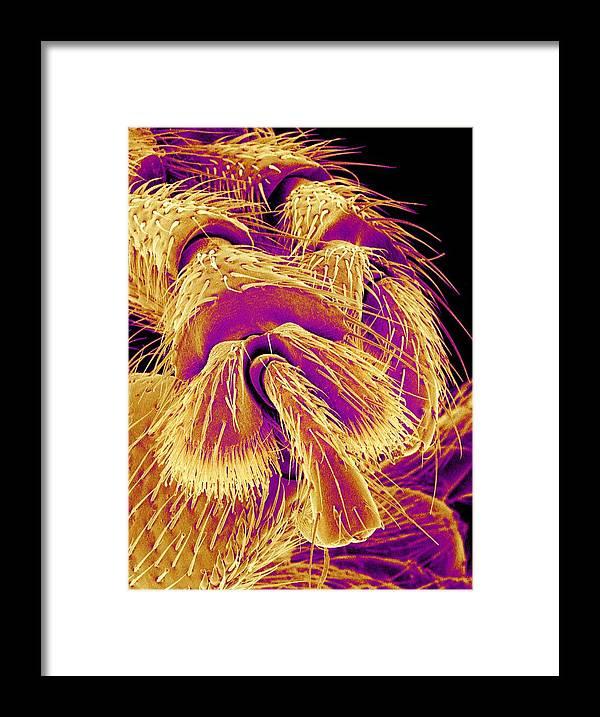 Animal Framed Print featuring the photograph Weevil Leg, Sem by Susumu Nishinaga