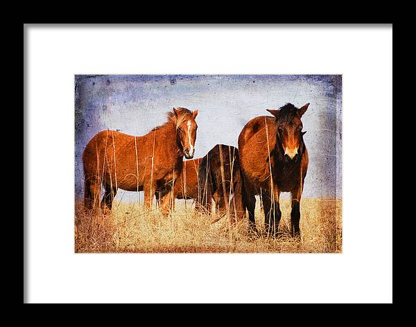 Farm Framed Print featuring the photograph Welcoming Committee by Joye Ardyn Durham