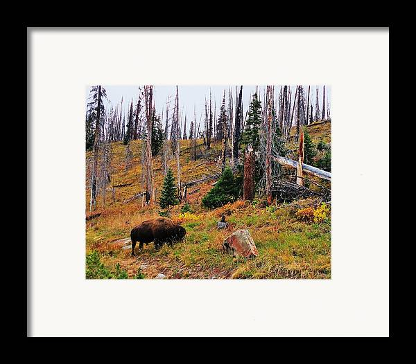 Animal Framed Print featuring the photograph Western Icon by Benjamin Yeager