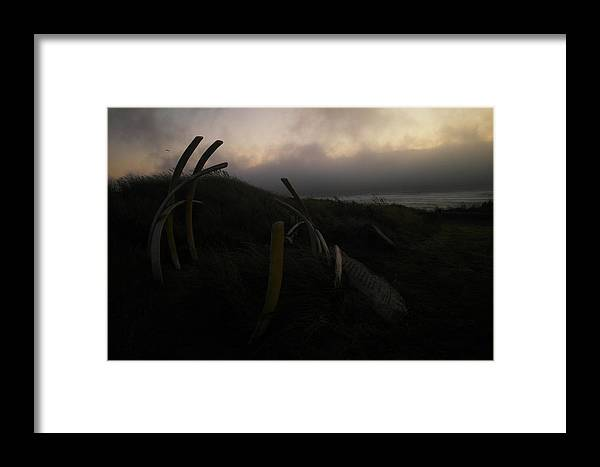 Oregon Framed Print featuring the photograph Whale Bones by Jeff Swan