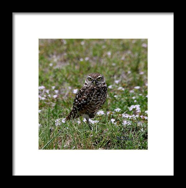 Burrowing Owl Framed Print featuring the photograph What Are You Looking At by Nancy Murrah