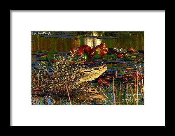 American Alligator Framed Print featuring the photograph What Lurks On The Swamp by Barbara Bowen