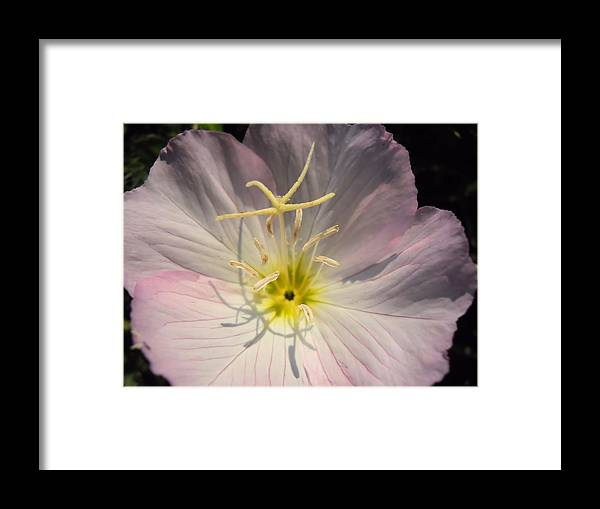 Buttercup Framed Print featuring the photograph What's Up Buttercup by Lynnette Johns
