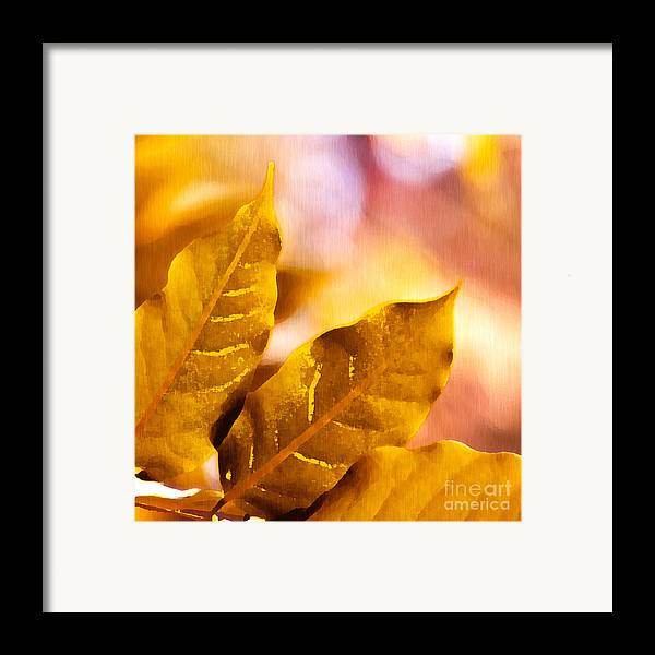Fall Framed Print featuring the drawing When Leaves Turn Gold by Artist and Photographer Laura Wrede