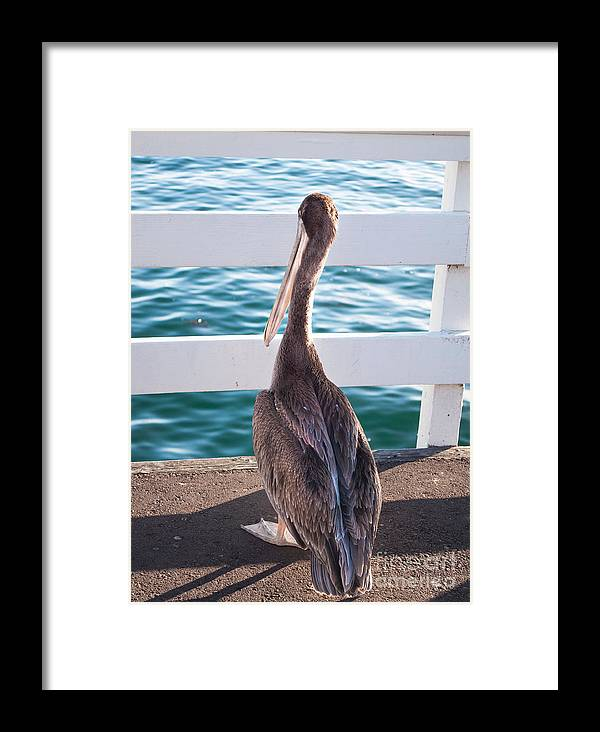 Pelican Framed Print featuring the photograph Where Did The Fish Go by Steven Van Gucht