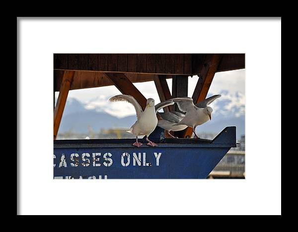 Seagulls Framed Print featuring the photograph Wheres The Fish by Debra Miller