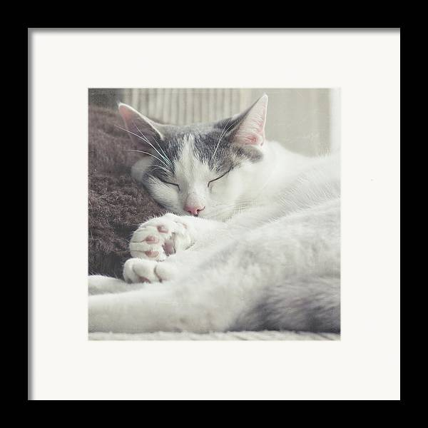 Square Framed Print featuring the photograph White And Grey Cat Taking Nap On Couch by Cindy Prins