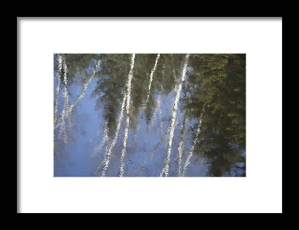Water Framed Print featuring the photograph White Birch Trees by Dr Carolyn Reinhart