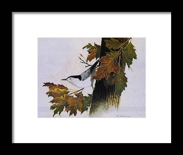 Bird Framed Print featuring the painting White-breasted Nuthatch by Bill Gehring