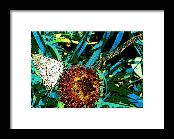 Butterly Framed Print featuring the photograph White Butterfly On Gaillardia Suavis by Louis Nugent