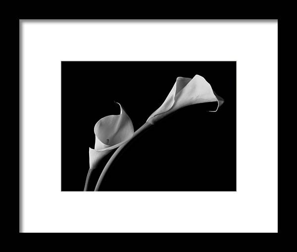 White Calla Lilies Framed Print featuring the photograph White Calla Lilies by John Wong
