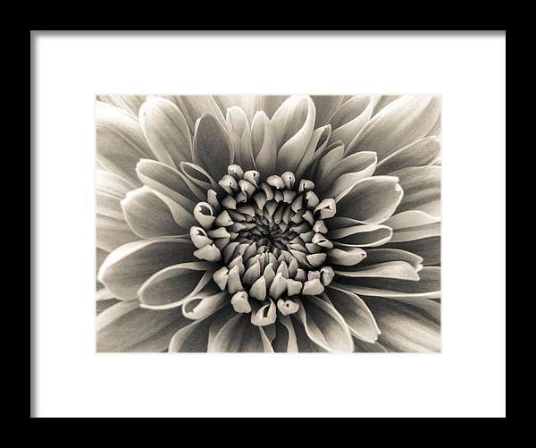 White Flower Framed Print featuring the photograph White Flower by Dawn OConnor