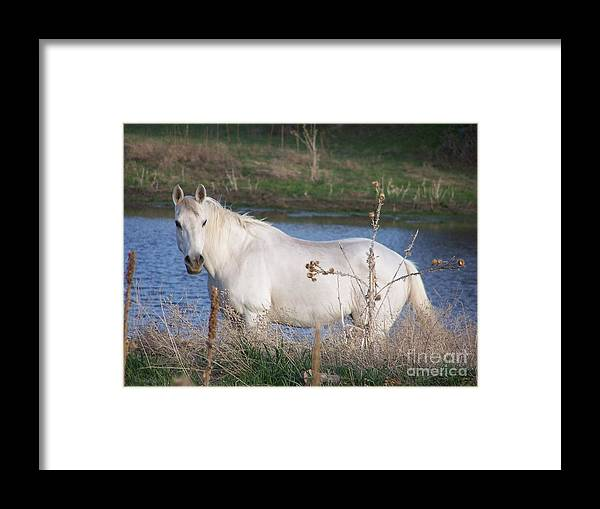 Gun Framed Print featuring the photograph White Horse by Jack Norton
