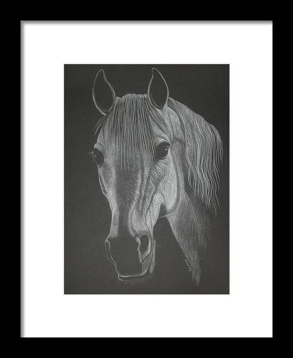 Horse Framed Print featuring the pastel White Mare by Stephanie L Carr