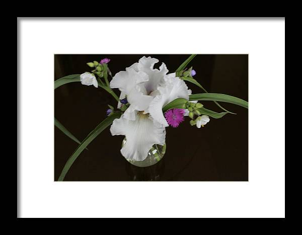 Orchid Framed Print featuring the photograph White Orchids by Patricia Haynes