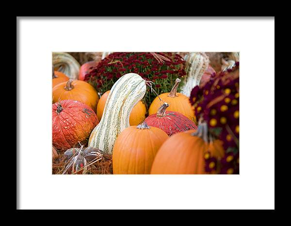 Agriculture Framed Print featuring the photograph White Pumpkin by Malania Hammer