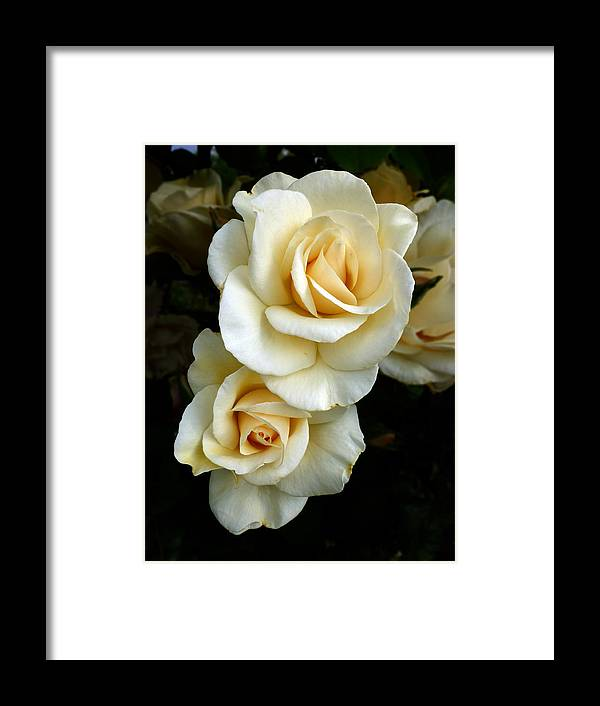Rose Framed Print featuring the photograph White Roses by Tony Klesert