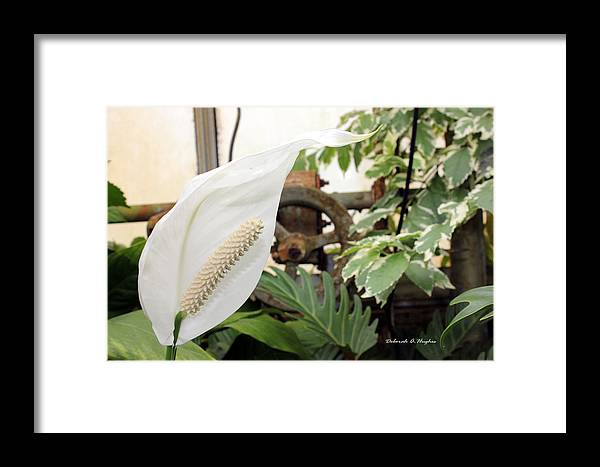 Floral Framed Print featuring the photograph White Rust by Deborah Hughes