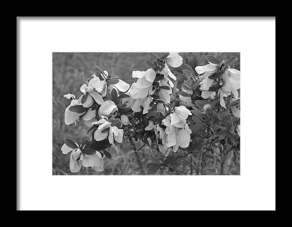 Framed Print featuring the photograph White Wild Flowers B W by Katrina Johns