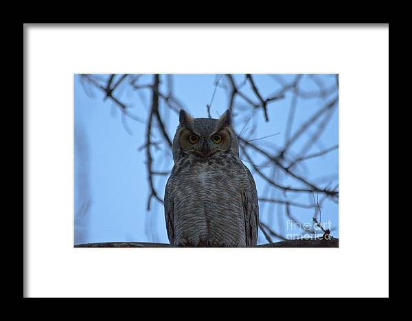 Owl Framed Print featuring the photograph Who 3 by Scotts Scapes