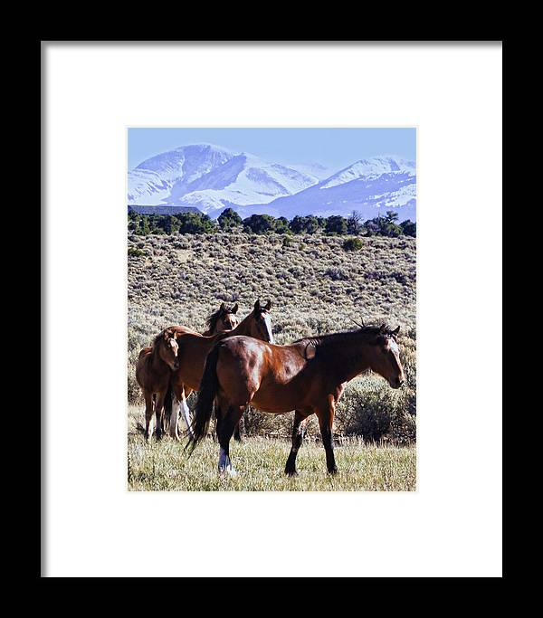Horse Framed Print featuring the photograph Wild Bunch by Terry Fiala