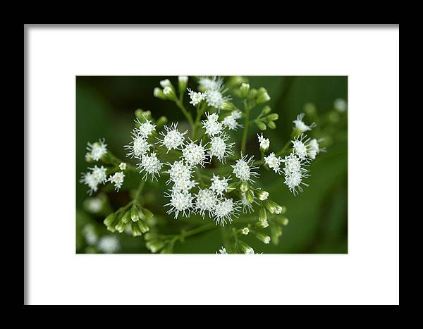 Wild Flower Framed Print featuring the photograph Wild Flower One by Wanda Brandon