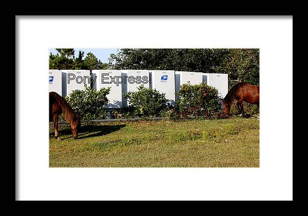 Wild Spanish Mustang Framed Print featuring the photograph Wild Pony Express by Kim Galluzzo Wozniak