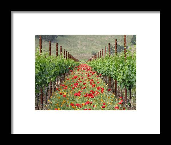 Vineyard Framed Print featuring the photograph Wild Poppy by Tina Marie