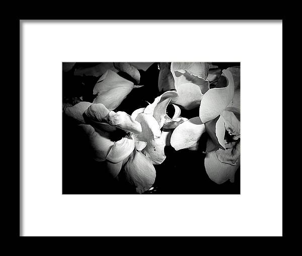 Wild Roses In Black And White Framed Print featuring the photograph Wild Roses In Black And White by Beth Akerman