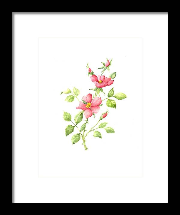 Flowers Framed Print featuring the painting Wild Roses by Susan Mahoney