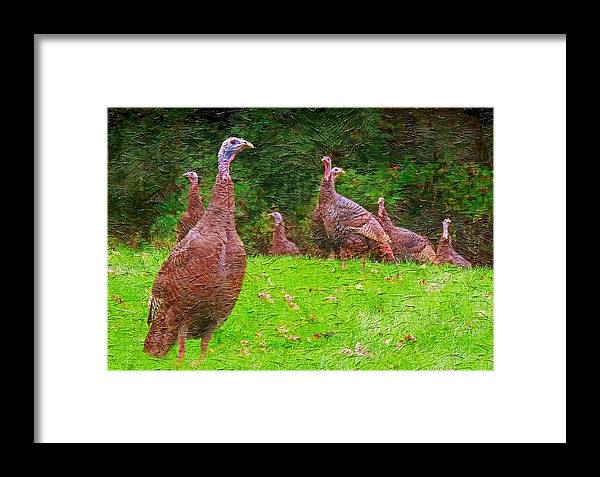 Wild Turkey Framed Print featuring the photograph Wild Turkey - 4 by Larry Mulvehill