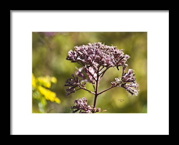 Flower Framed Print featuring the photograph Wildflower by Trish Tritz