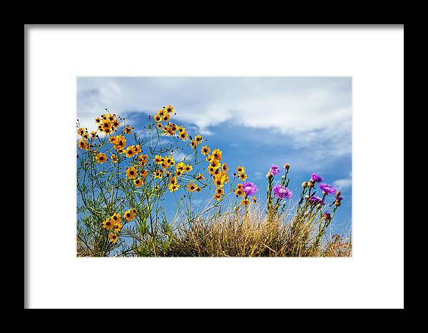 Wildflower Framed Print featuring the photograph Wildflower Weed by Tamyra Ayles