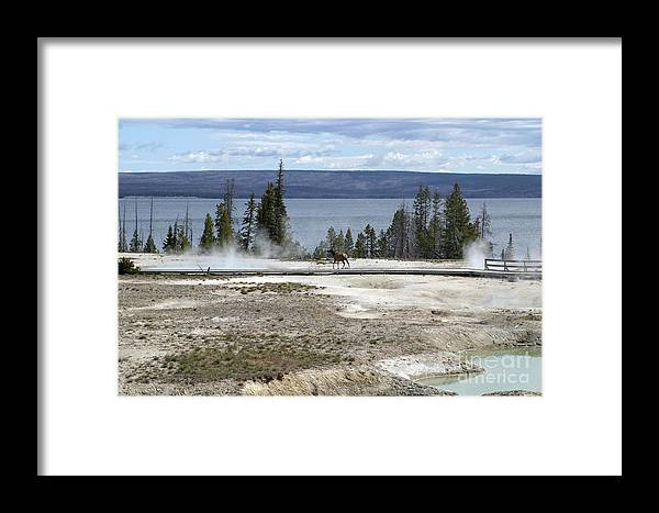 Wildlife Framed Print featuring the photograph Wildlife In Yellowstone by Living Color Photography Lorraine Lynch